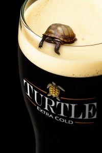 turtle-beer